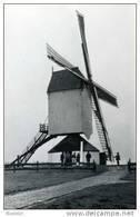 HEIST-OP-DEN-BERG (Antw.) - Molen/moulin - De Kaastrooimolen In 1981 Tijdens Het Opzeilen (molenaarscursus). - Heist-op-den-Berg