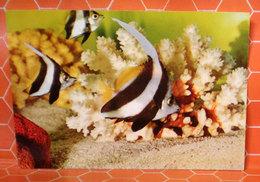 Pesci Tropicali Cartolina - Pesci E Crostacei