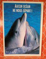 Delfini Delfino Cartolina - Pesci E Crostacei