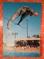 Delfini Delfino Marineland  Cartolina - Pesci E Crostacei
