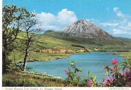Postcard Errigal Mountain From Gweedor Co Donegal Ireland [ John Hinde ] My Ref  B23191 - Donegal