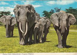 TANZANIA - The Elephant - Tanzania Stamp 1970's - Tanzania