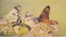 TANZANIA - Butterflies - Tanzania Stamps 1971 - Wide Format - Tanzania