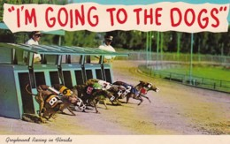 Greyhound Racing Greyhounds Breaking The Starting Box - United States