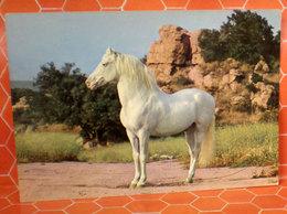 Cavallo Horse  Cartolina 1966 Targhetta Storia Postale - Caballos