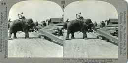 Burma Myanmar ~ RANGOON ~ Elephant Stacks Teak Logs In Lumber Yard Stereoview 27402 898 - Fotos Estereoscópicas