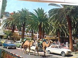 ESPANA CANARIE PUERTO DE LA CRUZ TENERIFE AUTO CAR PEUGEOT CAMMELLI   VB1984  GY6072 - Tenerife