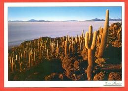 Cactusses.Bolivia. - Cactusses