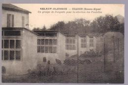 Cpa Du 04- ORAISON - Select élevage (poulettes ) - Francia