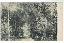 TRINIDAD - Through The Bamboos - Trinidad