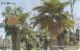 TARJETA DE CUBA DE UNA PALMA PETATE (ENDEMICAS DE CUBA) - Cuba