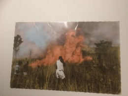 BJ - 1000 -  Feu De Brousse - Homme Tirant à L'Arc - Central African Republic