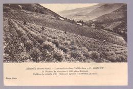 Cpa Du 04-ANNOT - Lavanderaies Cultivées - Francia