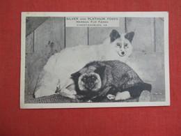 Silver & Platinum Foxes-- Harman Fur Farms-- Christiansburg Virginia    Ref 3088 - Animals