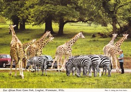 Postcard East African Picnic Game Park Longleat Wiltshire Giraffes And Zebras  My Ref  B23196 - Giraffes