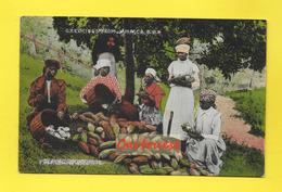 AMERIQUE - ANTILLES - JAMAIQUE - PULPING CHOCOLATE - Greetings From Femmes Noires Costume Typique - Jamaïque