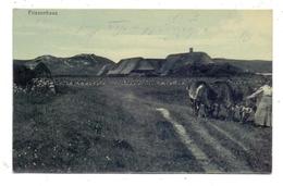 LANDWIRTSCHAFT - Friesenhaus, Kühe, 1903 - Bauernhöfe
