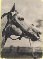 Tematica - 1960 - 15 Siracusana + Flamme Non Gareggiare In Velocità! - Cavallo In Bianco E Nero - Viaggiata Da Bologna P - Horses
