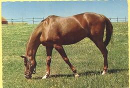 Tematica - Cavallo - Stampata In Italia - Not Used - Horses