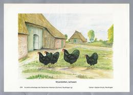 HOENDERS.- KIPPEN. KRIELEN. Wyandotten, Schwarz. - 1984. Musterbeschreibung Auf Der Rückseite - Prenten & Gravure