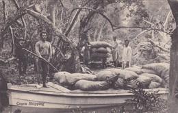 COPRA SHIPPING SOLOMON ISLAND.  CIRCA 1910s.-RARE-BLEUP - Salomon