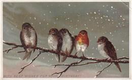 Rouge Gorge Et Petits Passereaux Hiver Sur Branche Illustrée Hiver 1886 - Kaufmanns- Und Zigarettenbilder
