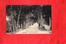 Carte Postale - CAROMB - D84 - Promenade Des Pins - Autres Communes