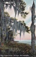 Florida Leesburg Moss Covered Cypress Tree Along Lake Harris - United States