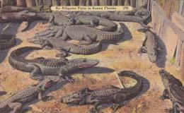 Florida Typical Alligator Farm - United States