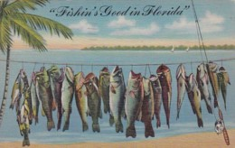 Florida Fishin's Good In Florida 1946 Curteich - United States