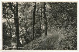 Menai Woods, Bangor, 1961 Postcard - Caernarvonshire