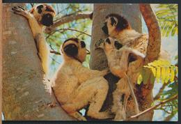 °°° 13015 - LEMURIENS DE MADAGASCAR - 1988 With Stamps °°° - Madagascar