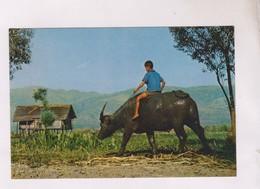 CPM BURMA, BUFFALO BOY(voir Timbre) - Myanmar (Burma)