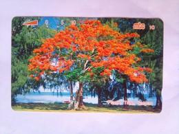Flame Tree 10 Units - Northern Mariana Islands