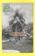 ANTILLES - JAMAIQUE - Greetings From Jamaïca - Sago Palm, Castelton Gardens - Jamaïque