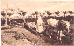 Puits Arabe - Túnez