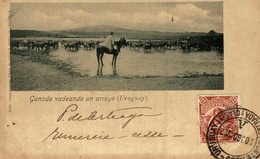 URUGUAY COSTUMES GAUCHO GANADO VADEANDO UN ARROYO - Uruguay