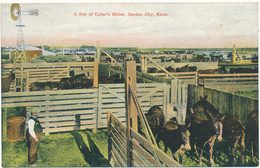 KANSAS - GARDEN CITY - A Few Of Colter's Mules - Etats-Unis