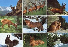 CP Animaux Des Alpes - Renard Marmotte  Bouquetin Ecureuil Faon - Autres