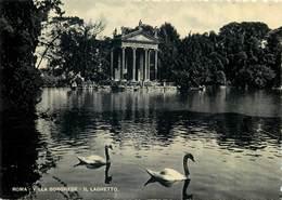 D1448 Roma ( Rome ) Villa Borghese Swans Cignes - Roma