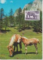 Féroé Carte Maximum 1993 Chevaux 245 - Féroé (Iles)