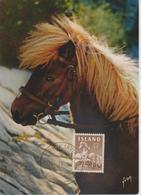 Islande Carte Maximum 1965 Poney 285 - Cartoline Maximum