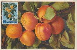 Saint Marin Carte Maximum 1958 Abricots 453 - Saint-Marin