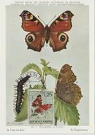 Saint Marin Carte Maximum 1963 Papillons 599 - Lettres & Documents