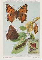 Saint Marin Carte Maximum 1963 Papillons 601 - Lettres & Documents