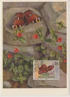 Saint Marin Carte Maximum 1963 Papillons 602 - Lettres & Documents