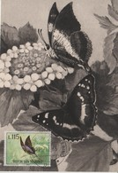 Saint Marin Carte Maximum 1963 Papillons 603 - Lettres & Documents