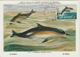 Saint Marin Carte Maximum 1966 Dauphin 678 - Lettres & Documents