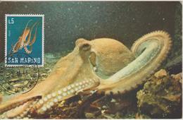 Saint Marin Carte Maximum 1966 Poulpe 680 - Lettres & Documents