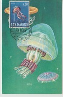 Saint Marin Carte Maximum 1966 Mèduse 683 - Lettres & Documents